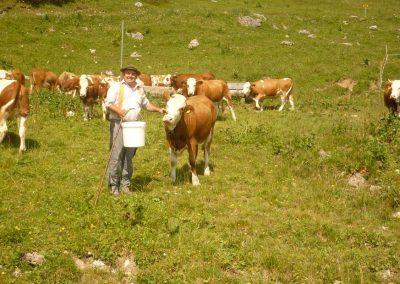 wienertoni-landwirtschaft-07
